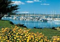 harborflowers.jpg