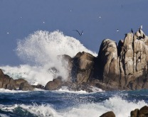 wave_rock_birds_4968.jpg