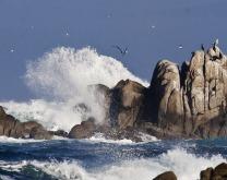 wave_rock_birds_4968.jpg